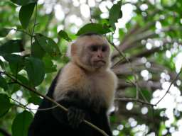 Manuel Antonio Nation Park – Costa Rica