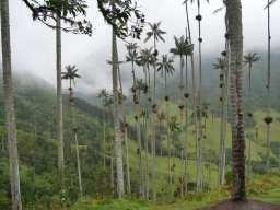 San Gil – Bogota – Salento – Cali – Colombia